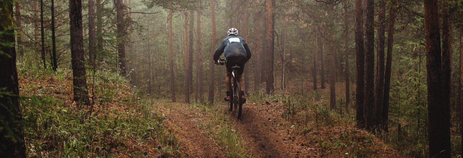 Mountainbiker In Het Bos